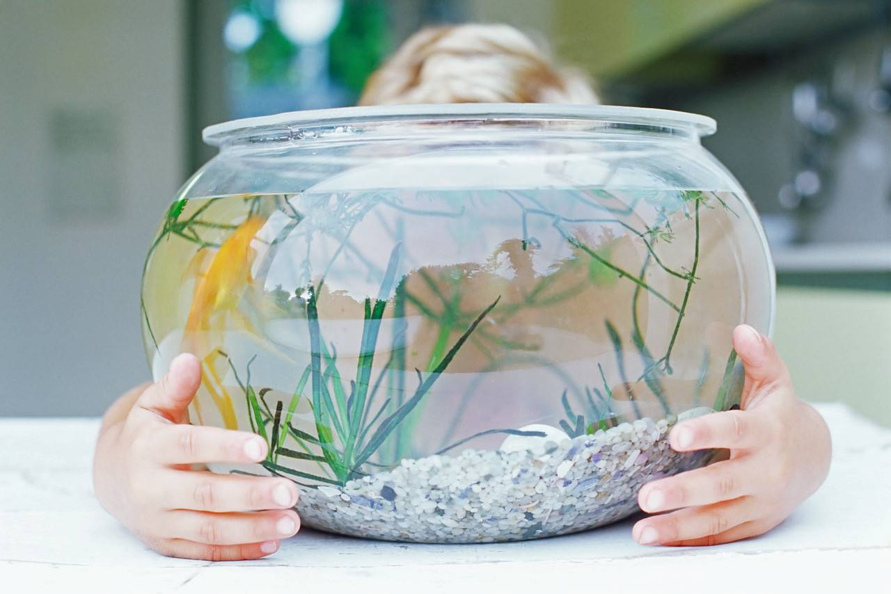 Hr fishbowl hr fishbowl for Fish in a bowl